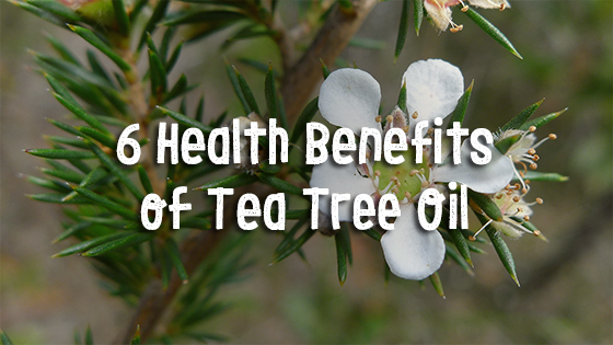 6 Health Benefits of Tea Tree Oil